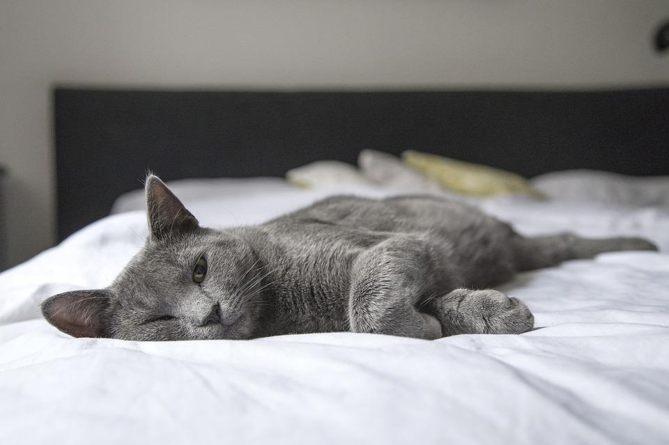 чтобы правильно выспаться, не спите с домашними животными