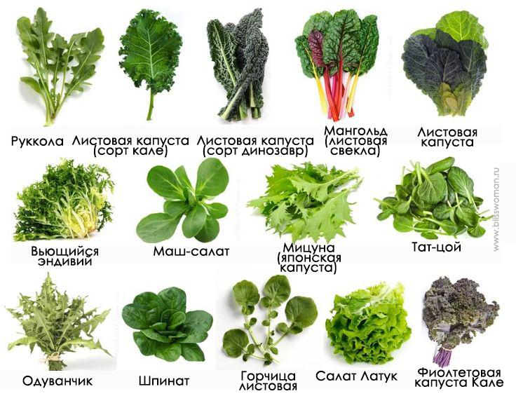 зеленые овощи список