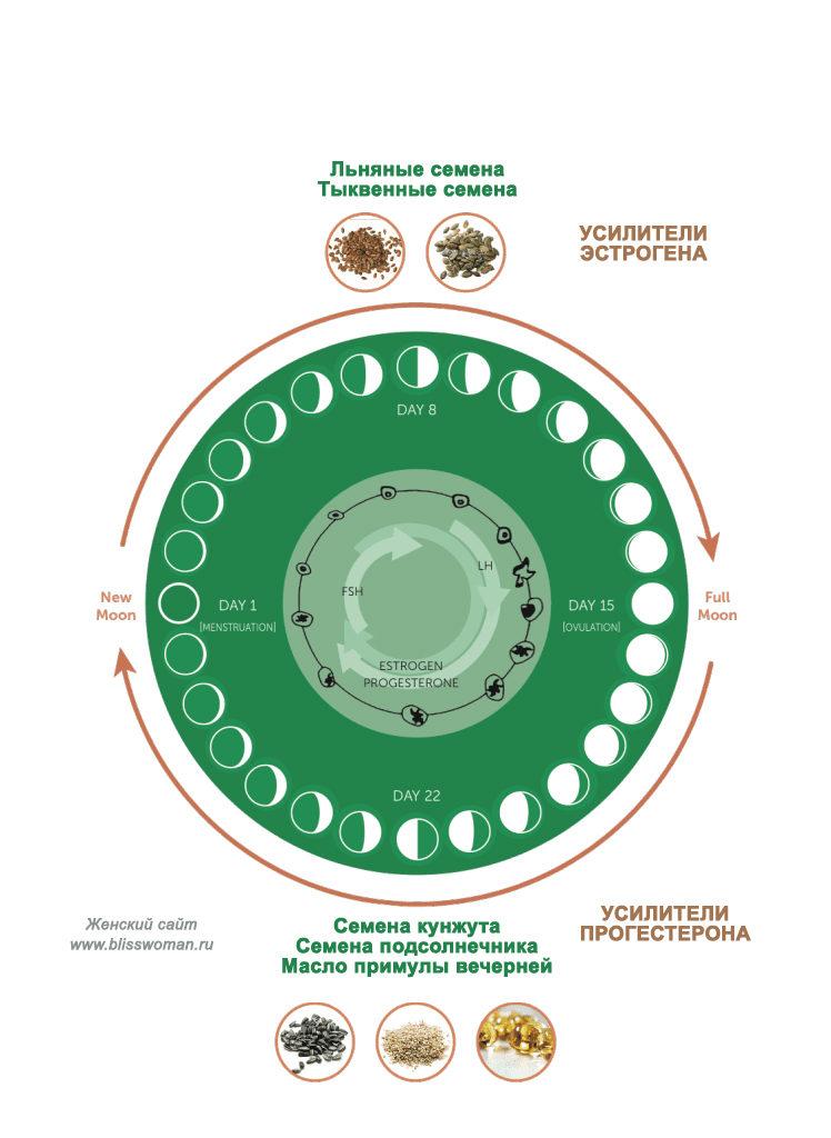 Восстановление цикла с помощью семян