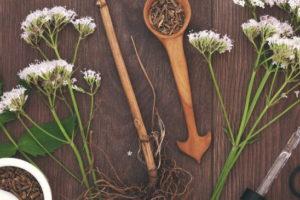 Валериана: лечебные свойства и противопоказания