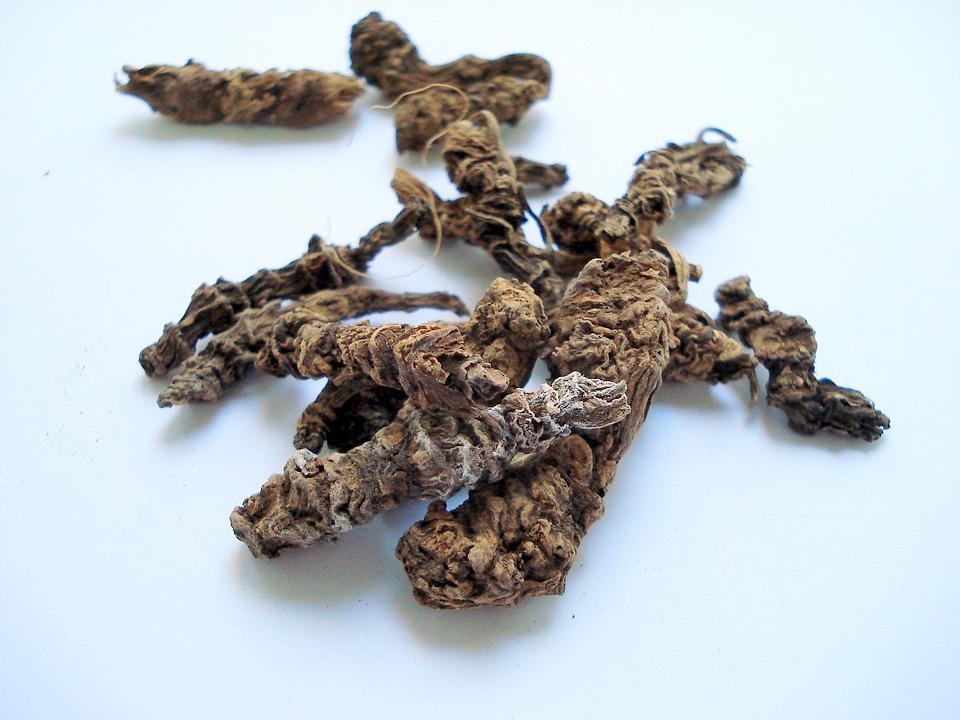 Лечебными свойствами обладает корень растения валериана