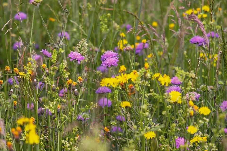 Полевые горькие травы - отличный детокс для печени