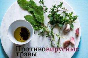 Противовирусные травы для усиления иммунной системы и борьбы с инфекцией