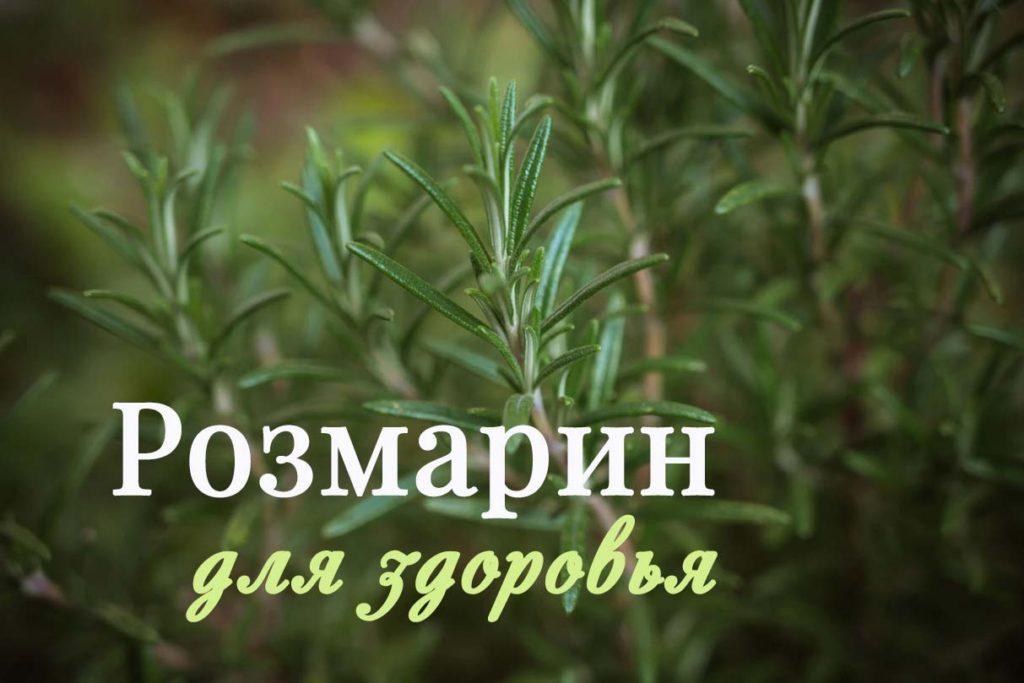 трава розмарин применение