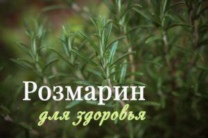 Розмарин – трава для здоровья, применение и полезные свойства для оздоровления организма