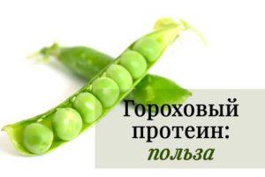 Гороховый протеин: растительный источник белка, полезный для сердца